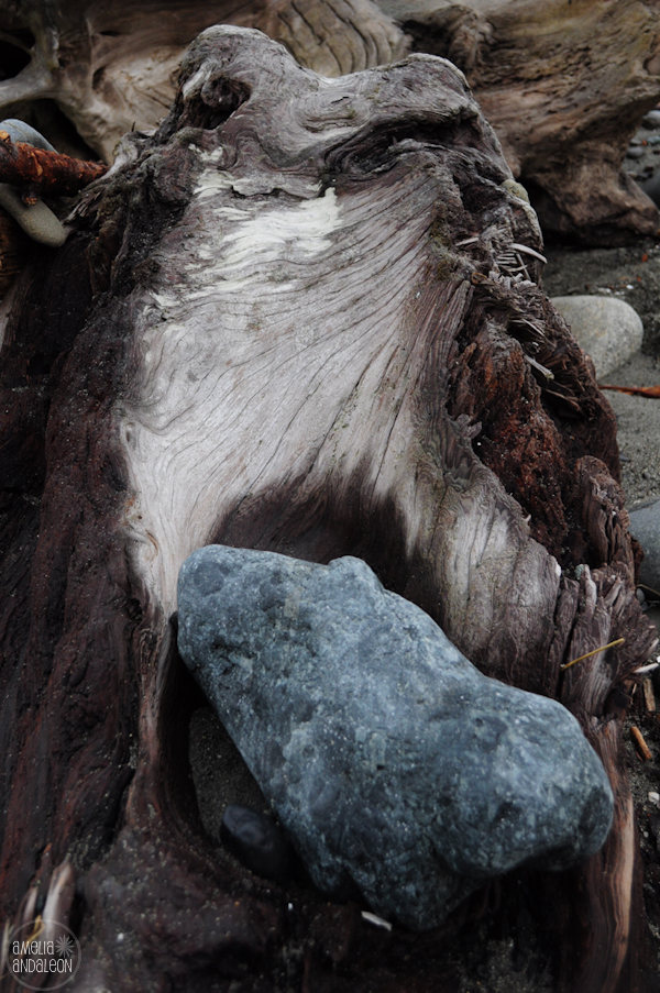 An Optical Illusion Find The Hidden Image In The Driftwood Amelia