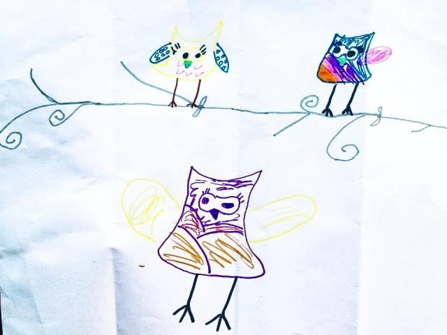 noras-owls
