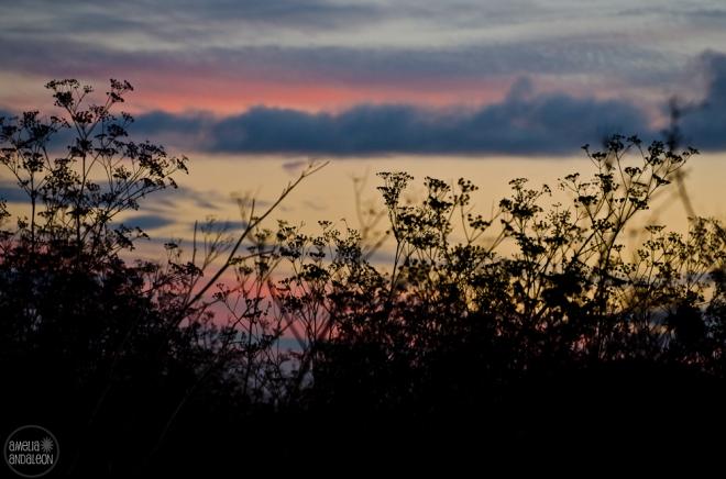 coastanoa-sunset-fb