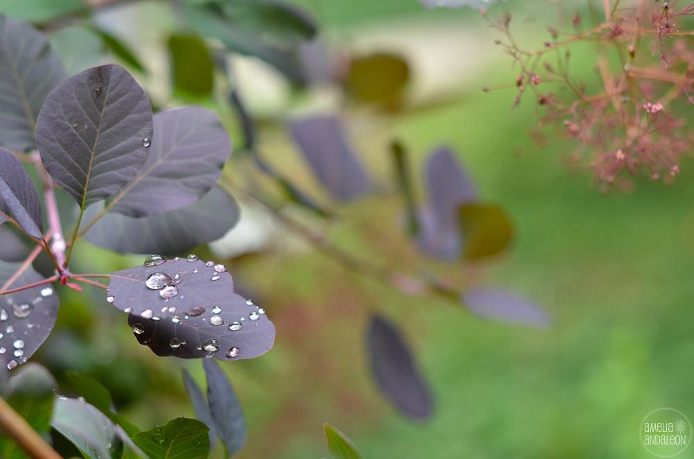 day4-raindrops-3