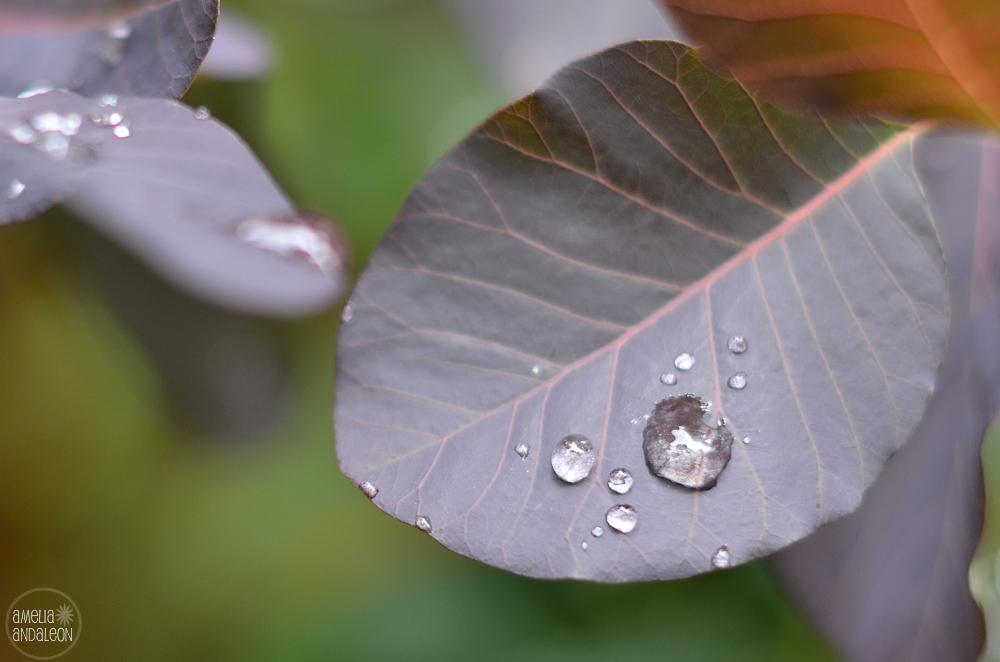 day4-raindrops